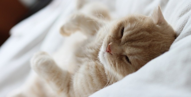 猫が痙攣する原因や病気、対処の方法など
