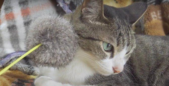シェアお断り?猫ちゃんのマイオモチャ