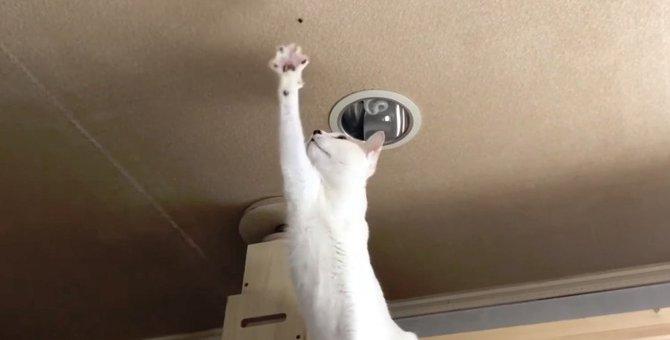 ハンター猫ちゃん!蜘蛛に勝負を挑む!!