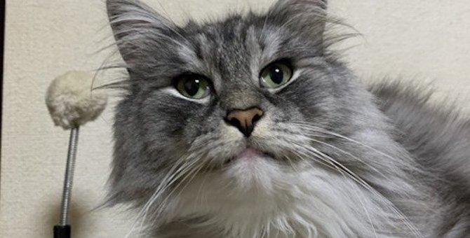 猫が『初めて見るもの』にする仕草や行動3つ