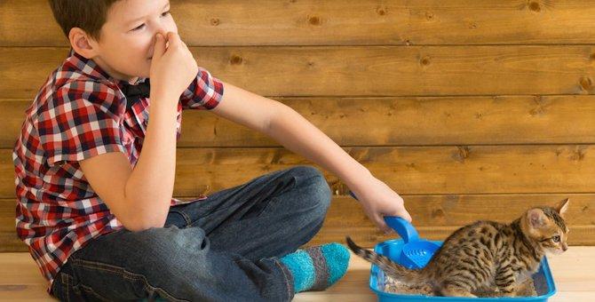猫の尿に関するトラブル 原因や予防する方法