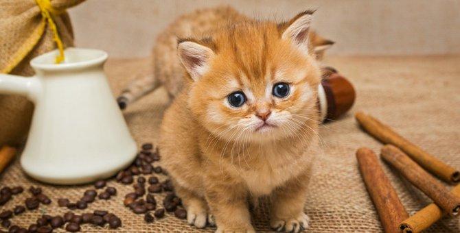 猫にシナモンは危険!嫌う理由と食べてしまった時の対処法