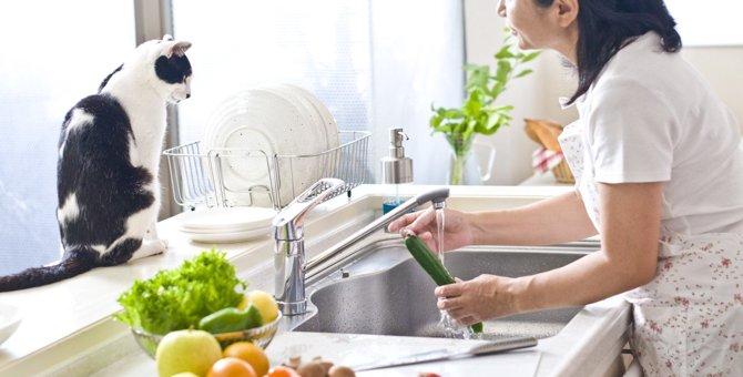 猫が『キッチン&リビング』で巻き込まれやすいトラブル3選