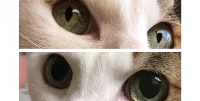 猫の目の仕組みと見え方について