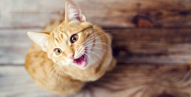 猫が口をパクパクさせるのはどんな時?10のシチュエーション