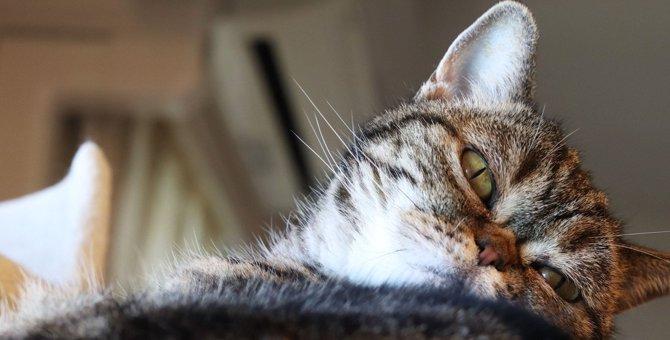 猫が飼い主に『ムカッときている』こと3つ