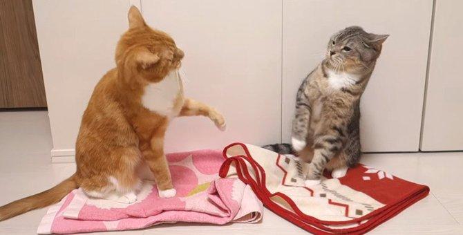 そっちも気になるニャ~!ブランケットを巡った猫ちゃん達のやりとり♡