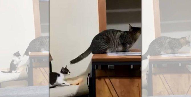 猫のしっぽが長い理由にほっこり♡イクメンお兄ニャンの優しさに感動