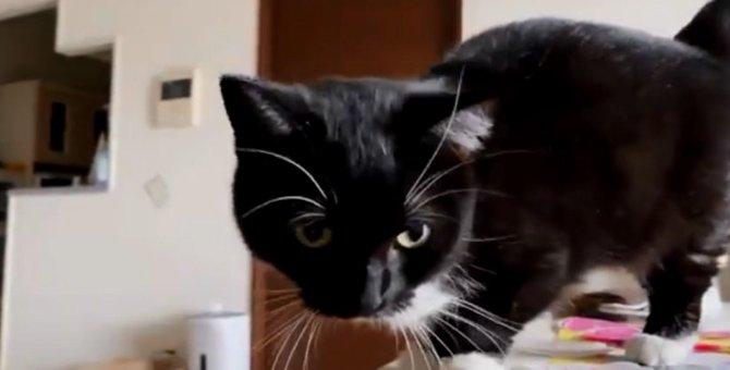 『ニャー』とは鳴かない!7万いいねを獲得した猫さんの鳴き声とは