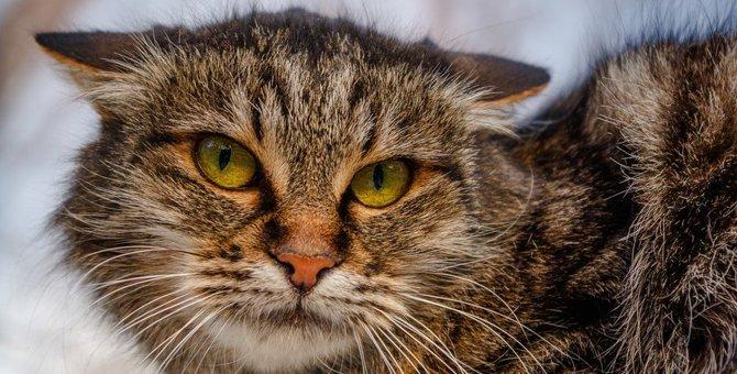 猫の不満が爆発する前に直そう!要チェック項目5つ