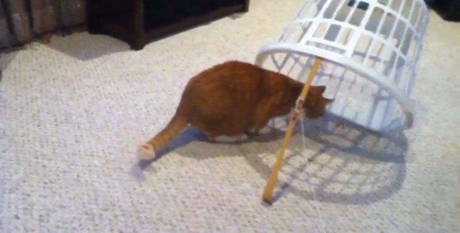 猫ちゃんにトラップを仕掛けてみたら…