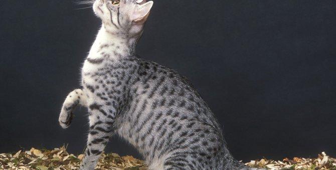 日本全国の猫神様まとめ!猫神社と猫寺のご紹介