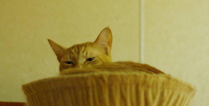 大変!多頭飼いの我が家で『猫風邪』が大流行!我が家のエピソード