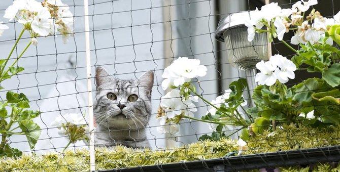 猫が安心して遊べるベランダをDIY!賃貸でもできる方法