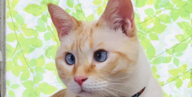 『猫の耳』が表す心理状態5つ!動き方のパターンで感情が丸わかり!
