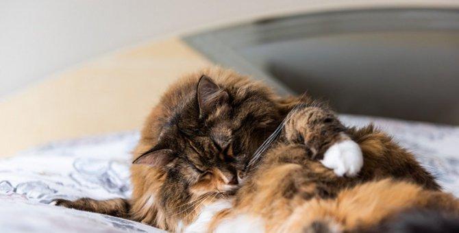 猫がしつこくお腹を舐めている原因と対処法3つ