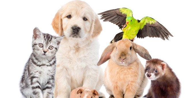猫と相性の悪い動物3種!一緒に暮らすのが難しい理由は?