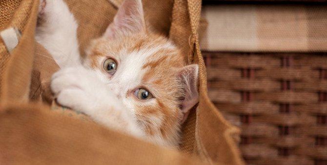 猫のトートバッグ おすすめ集!A4サイズもOK!おしゃれでかわいい商品31選