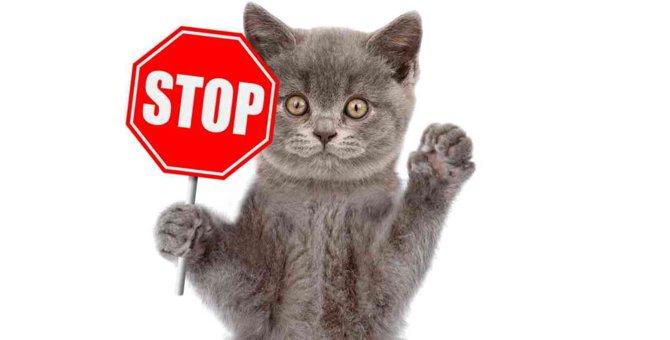 猫に絶対与えちゃダメな『NG魚介類』3選