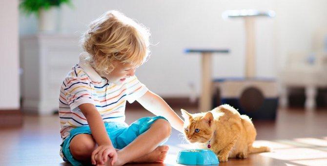 猫にヤクルトは与えても大丈夫?栄養や与える際の注意点など