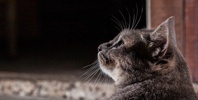 猫の最高齢!世界記録と日本記録について