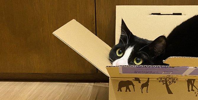 猫が絶対に喜ぶ『飼い主の言葉』5選