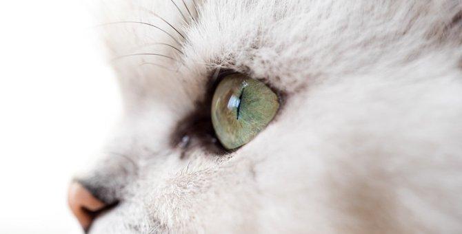 猫の目に関する特徴や基礎知識