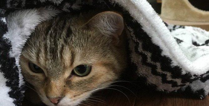 寒い冬のお留守番でも安心できる「猫のための快適環境作り」のポイント4つ