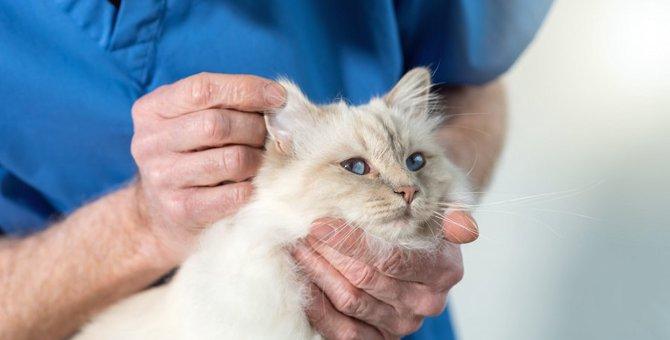 猫が頭をブルブルするのはなぜ?考えられる5つの原因