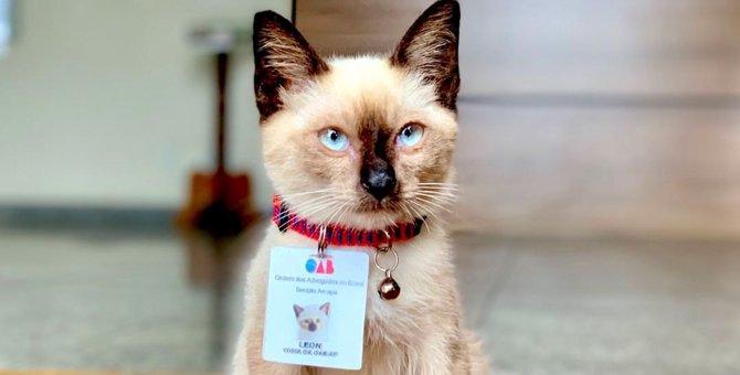 検事局に住みついたホームレスの子猫に苦情…圧巻の対策とは?