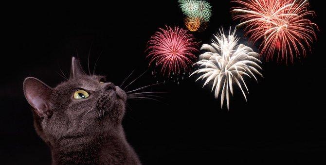 花火で猫が驚いた時の5つの対処法