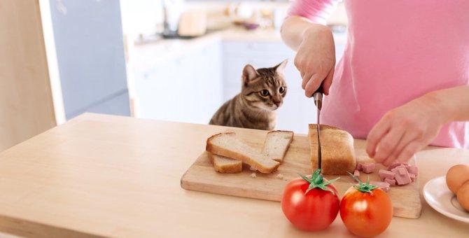 猫はクリームパンを食べても大丈夫?好きな理由な注意点