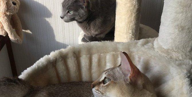 猫が『高い所』を好む心理4選!トラブルを防ぐためにやるべき対策まで解説
