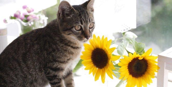 猫の夏の熱中症対策3つのポイント