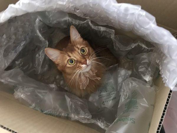 猫は暗い場所でもハッキリ見えてる?人間と猫の「目」の違い