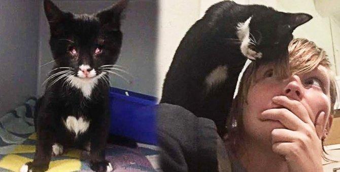 両目が欠損した盲目の子猫…運命の出会いで起死回生を遂げる!