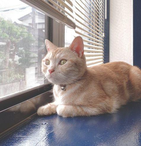 猫が家の中から外を眺めている時に考えていること5つ