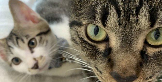 猫が『好きな猫』にだけする仕草3選♡仲良しはこんな行動を取り合っている!