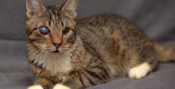 猫の目に濁りがある2つの原因、症状、治療法