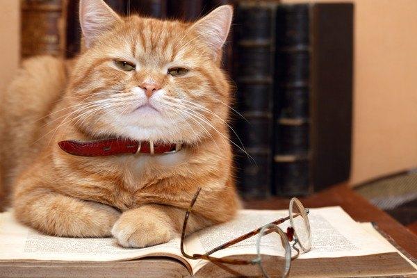 猫は老化で性格が変化する?5つの変わる事