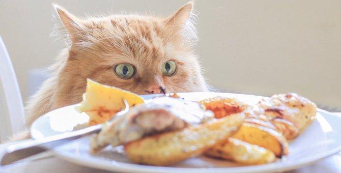 猫に与えてはダメな食べ物9つと対処法