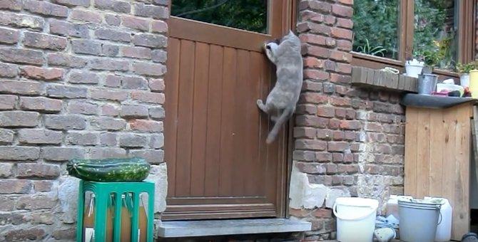 ドア開けの天才猫さん♪鍵のかかったドアはどうやって開ける?