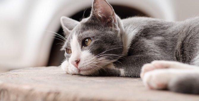 猫が寂しくて切ない気持ちの時にする行動5つ