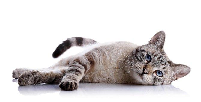 猫の発情期 オスとメス別でみる問題点