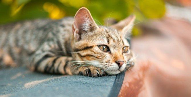 猫が寝ない理由と対処法について