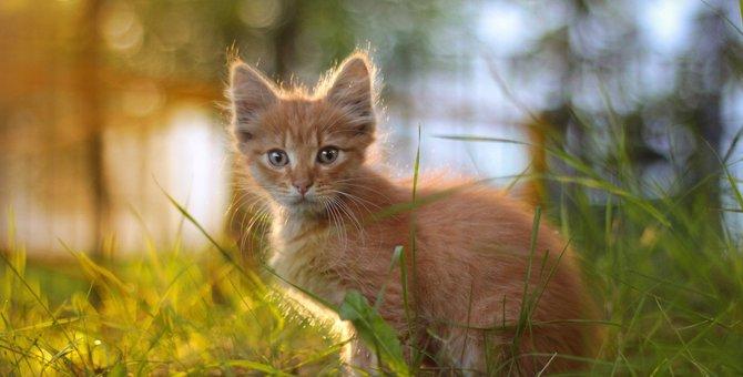 赤毛の猫はどんな性格?オスが多いって本当?