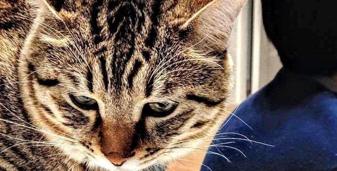 猫を叱ると逆切れされる…上手にダメを伝えるコツ5つ