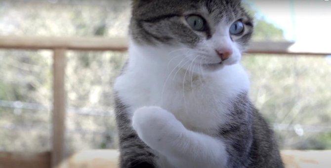 屋根の上にあるものとは?!見つけて大興奮な猫ちゃん