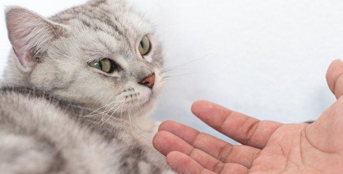 猫が『ボディタッチをかわして逃げる』ときの心理4選