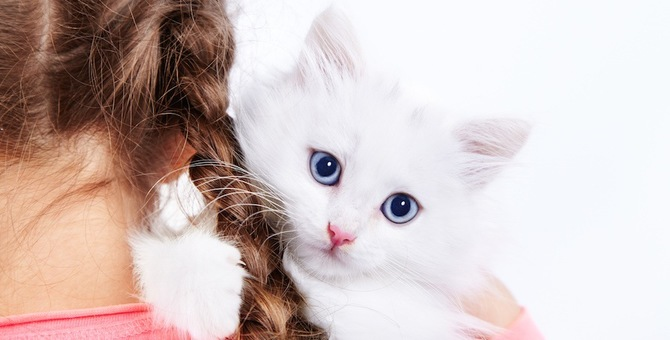 白猫にまつわる3つのジンクス